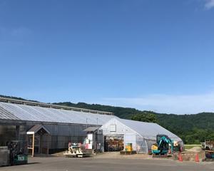 北海道も夏真っ盛りです!