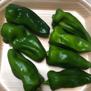 ピーマンが3度目の収穫、青椒肉絲にしていただきました、