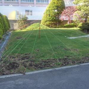 芝生の保護