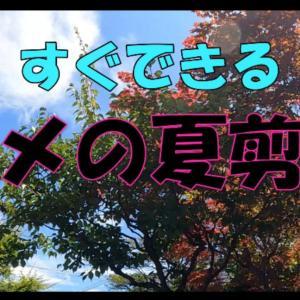 梅の木の夏剪定 北国バージョン
