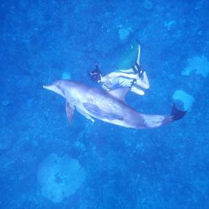 青くあたたかい海でイルカと泳ぐ