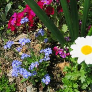桜と小さな花々と