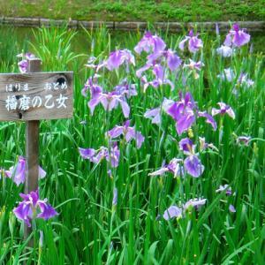 梅雨の楽しみ:万博記念公園の花