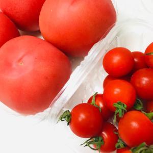 リコピンたっぷりのトマト お得で効率のいい摂取方法は?