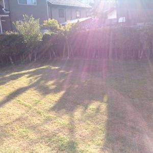 芝生成長日記①