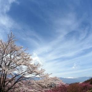 2017 大草城址公園の桜