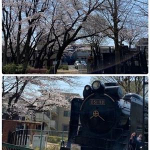 テクテクと~枝垂桜