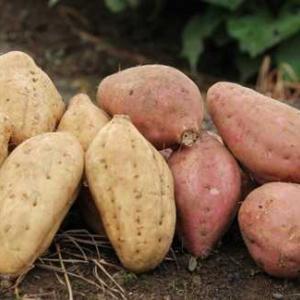 この季節におススメの美味しい野菜と果物