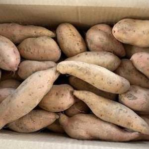 さつま芋の箱買い~半年以上の保存は可能(^_-)-☆