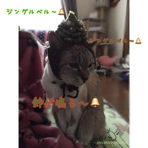 クリスマスの練習だよね〜♪