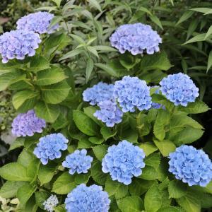 7月の庭に咲いた花
