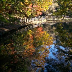 大町自然観察園のもみじ山2019