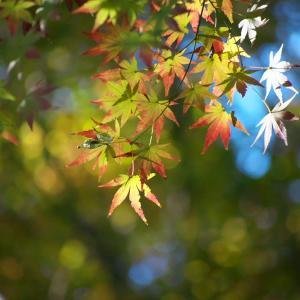 ピンポイントの紅葉