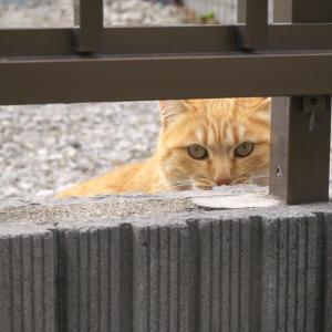 覗くネコさん
