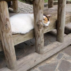 遠慮がちな猫