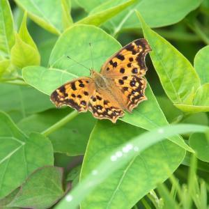 雨上がりの蝶々たち
