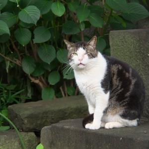 ウインク猫