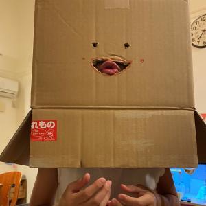 箱入り娘。
