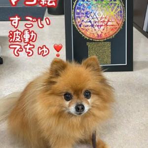 今日の愛犬「ラブ」10/22