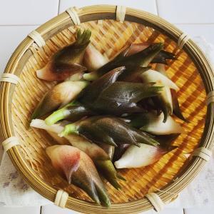 収穫したみょうがで押し寿司