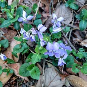 早朝のお散歩で見つけた春♪