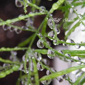 雨上がりのお楽しみは水滴探し♪