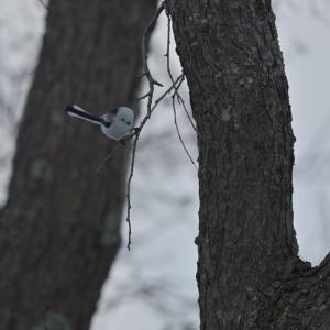 鳥がいない ~今週のウトナイ湖