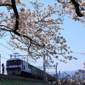 武庫川で桜見物~2020年春