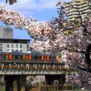 桜ノ宮で桜見物~2020年春