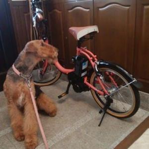 自転車届いた!