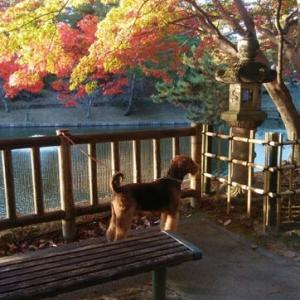 東公園の紅葉もピーク過ぎかな。