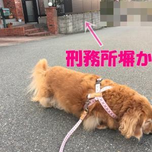 オバサンにも出来るDIYその⑧(左官編?)