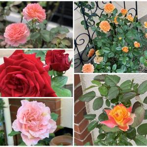 キレイな薔薇にはトゲがある