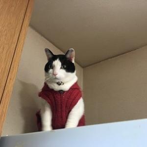 手編みセーター着せてみた。
