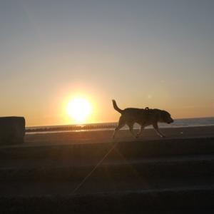 髪と夕日&猫背