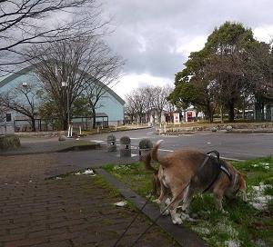 寒い公園お散歩