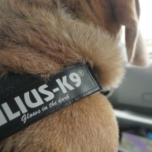 LULIUS-K9 ベルトハーネス
