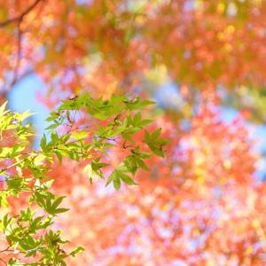 【カメラ散歩】紅葉のつくば山
