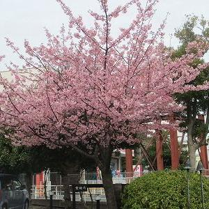 静岡県伊東市と中伊豆での旅行貯金活動