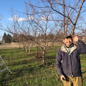 たとえ明日、世界が滅亡しようとも今日私はリンゴの木を植える