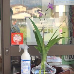 店内に花を飾る