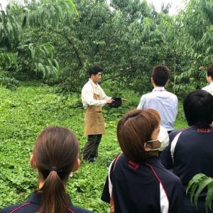 桃の産地見学会