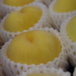 桃の最終品種「黄貴妃」出荷で大わらわ