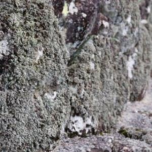 「鬼木の棚田」の石垣