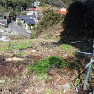 リンゴの木と河津桜を植栽