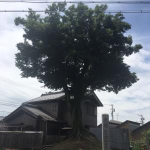 冨田一里塚   美濃路