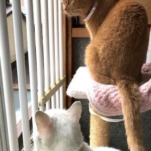窓の外の楽しみ