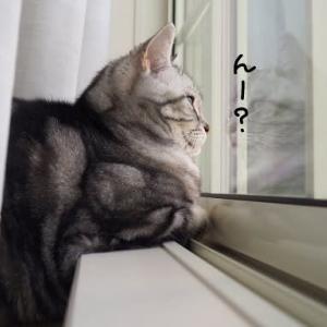 窓がある。