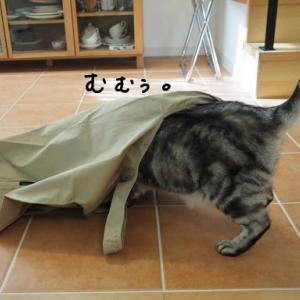 わたしもあなたも袋好き。