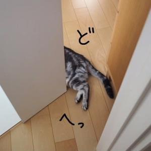 猫的生活。